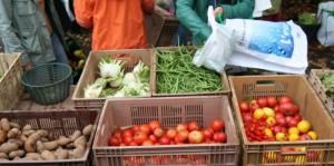 cover-r4x3w1000-578d30d49e338-220713-challenges-amap-agriculture-producteur-consommateur